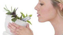 Pourquoi et comment aborder l'aromathérapie en expatriation