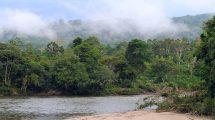 10 raisons d'aller dans la jungle