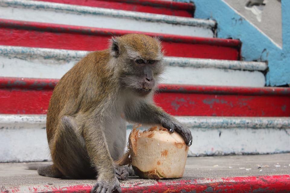 monkey-1122880_960_720