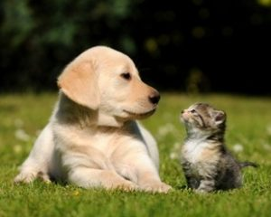 animaux_chat_chien