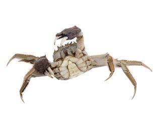panier_de_crabe