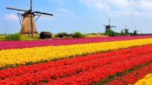 Pourquoi j'ai choisi les Pays-Bas