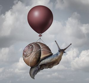 Du lien entre les expats, les mollusques et les gastéropodes...
