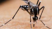 La dengue, le Zika et le Chikungunya : ce qu'il faut savoir