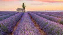 Un bout de Provence à l'étranger