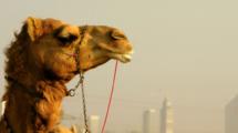 Et-si-Dubai-etait-la-ville-revee-des-expats-UNE femmexpat 559x520