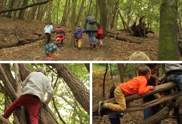activité en forêt Steiner